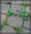 Нет проросшей травы